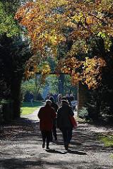Herstsonne im Hamburger Stadtpark - rotbraunes Herbstlaub an den Bäumen im Park.