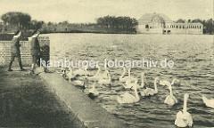 Jungen spielen am Seeufer bei den Kaskanden im Hamburger Stadtpark - Schwäne auf dem Wasser; im Hintergrund das Parkcafé.