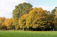 Spaziergänger und Herbstbäumen im Hamburger Stadtpark / Bereich der ehem. Milchwirtschaft.