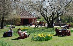 Frühlingssonne im Hamburger STadtpark - ParkbesucherInnen im Hummelstuhl auf der Liebesinsel in der Sonne, blühende Osterglocken.
