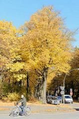 Strassenbäume mit gelben Blättern im Herbst - Fahrradfahrer in der Carl-Petersens-Strasse von Hamburg Hamm.