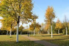 Allee mit Herbstbäumen im Elbpark Entenwerden an der Norderelbe in Hamburg Rothenburgsort -  Teil vom Elberadweg / Radwanderweg.