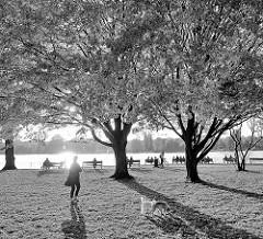 Hundewiese / Hundeauslaufzone an der Aussenalster in Hamburg Uhlenhorst - Frau mit Hunden, Parkbänke unter Bäumen; ehem. Areal vom Uhlenhorster Fährhaus - Gegenlichtaufnahme in Schwarz-Weiß.