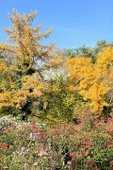Herbstfarben im Botanischen Sondergarten in Hamburg Wandsbek.