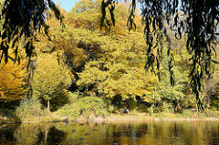 Teich mit herbstlichen Bäumen im Hammer Park -  - Herbstfotos aus der Hansestadt Hamburg.