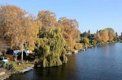 Herbstbäume, Weide mit ins Wasser der Bille hängende Zweigen - Schrebergärten / Kleingarten am Wasser in Hamburg Hamm.