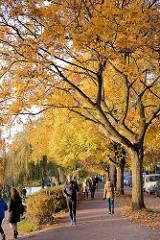 Spaziergänger + Jogger unter Herbstbäumen / Strassenbäumen mit gelben Herbstlaub am Alsterufer in Hamburg Winterhude / Strasse Bellevue.