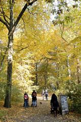 Herbstspaziergang unter Herbstbäumen mit gelben Blättern im Hammer Park - Herbstbilder aus der Hansestadt Hamburg.