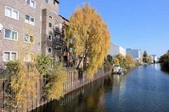 Blick vom Grevenweg im Hamburger Stadtteil Hamm auf Wohnhäuser am Ufer des Mittelkanals - wild wachsende Birken mit Herbstlaub in der Kaimauer.