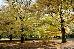 Herbstlaub in grosse Herbstbäume im Sonnenlicht -  - Herbstbilder aus der Hansestadt Hamburg.