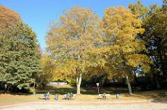 Parkbesucher vom Hammer Park sitzen unter hohen Bäumen mit Herbstlaub in der Sonne -  - Herbstbilder aus der Hansestadt Hamburg.