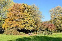 Sitzbank unter Herbstbäumen, blauer Himmel - Thörls Park in Hamburg Hamm.
