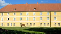 Kasernengebäude / Magdeburger Kaserne - Pferd auf einer Wiese, Bilder aus Terezin / Theresienstadt.