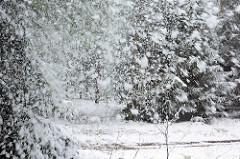 Schneefall im Tangstedter Forst.