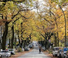 Strassenbäume im Herbst - Herbstlaub in der Sierichstrasse in Hamburg Winterhude, parkende Autos.