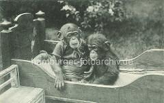 Historische Aufnahme von Hagenbecks Tierpark - Schimpansen sitzen im Kinder Holzbett; einer der Schimpansen ist mit Menschenkleidung angezogen.