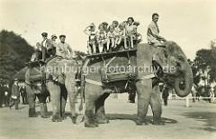 Reitelephanten in Hagenbecks Tierpark, Hamburg Stellingen; Kinder - Jungen und Mädchen sitzen auf Holzbänken auf dem Rücken der Elephanten, die über das Tierparkgelände laufen.