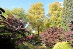 Japanischer Garten im Herbst - Grünanlage in Hamburg, Planten un Blomen.