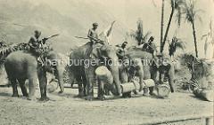 Indische Völkerschau von Gustav Hagenbeck - historische Darstellung von indischen Arbeitselephanten unter Palmen, die Tiere tragen Baumstämme, die Elefantenführer sitzen auf den Tieren.