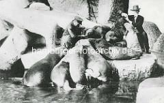 Seelöwen im Freigehege - Hagenbeck und Wärter; historische Fotos von Hagenbecks Tierpark in Hamburg Stellingen.