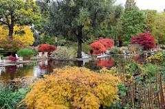 Wasserlauf in Planten un Blomen - Holzstühle am Wasser, Zierahorn im Herbst mit roten und gelben Blättern.