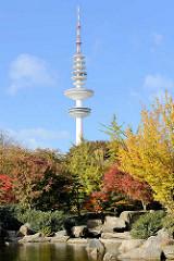 Japanischer Garten in Planten un Blomen in der Hamburger Innenstadt; herbstlich gefärbter Ahorn; Fernsehturm.