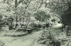Alte Aufnahme von den Begräbnisstätten beim Dammtor - die Gräber sind überwuchert; die alte Hamburger Friedhofsanlage wurde um 1930 aufgelöst.