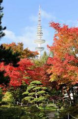 Japanischer Garten in Planten un Blomen in der Hamburger Innenstadt; Ahornbäume im Herbst - Heinrich Hertz  Turm, Telemichel zwischen Herbstbäumen.