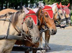 Droschkenpferde am Schlossplatz von Rheinsberg - Pferde mit Häkelmützen.
