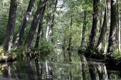 Spreewald bei Lübbenau - hohe Bäume spiegeln sich im Wasser.