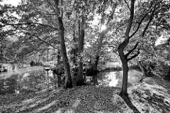 Fliesse im Spreewald bei Lübbenau - Bäume am Ufer; die Sonne scheint durch die Äste - Gegenlichtaufnahme in Schwarz - Weiß.