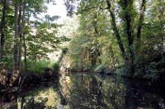 Spreearm / Fließ - Bäume und Sträucher am Wasser; Kanal bei Lübben (Spreewald)