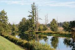 Blick über die Spree bei Lübbenau - Auenlandschaft / Moorlandschaft, abgestorbene Bäume; grüne Erlen und Birken am Spreeufer.