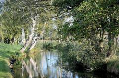 Lauf der Hauptspree bei Lübbenau im Spreewald - Erlen und Birken am Ufer.