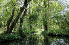 Spreewald in Lübbenau - schmaler Kanal, Bäume stehen dicht am Ufer.