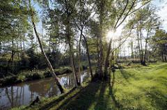 Lauf der Hauptspree bei Lübbenau - Birken und Erlen am Ufer.
