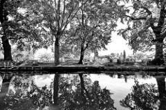 Schwarz-Weiß Aufnahme - hohe Bäume am Spreeufer in Lübben (Spreewald)
