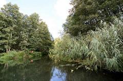 Fliess / Kanal im Spreewald bei Schlepzig - Bäume und hohes Schilf am Ufer.