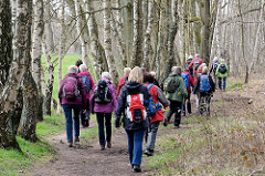 Wandergruppe zwischen Birkenstämmen auf einem der Wanderwege im Naturschutzgebiet Wittmoor in Hamburg Duvenstedt.