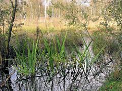 Hochmoor Wittmoor in Hamburg Duvenstedt - Hochmoorsee, Schilf und Erlen im Wasser - Wiese mit Birken.