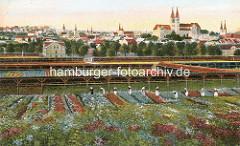 Historische Darstellung der Blumenzucht in Quedlinburg - Frauen arbeiten in den Blumenfeldern, im Hintergrund das Panorama der Stadt mit dem Schlossberg und Kirchtürmen.