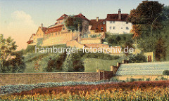 Historische Aufnahme vom Münzenberg in Quedlinburg - im Vordergrund Blumenfelder und Gewächshaus.