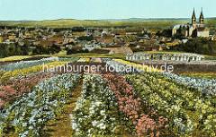 Historische Darstellung der Blumenzucht in Quedlinburg - Frauen arbeiten in den Blumenfeldern, im Hintergrund das Panorama der Stadt mit dem Schlossberg und Stiftskirche St. Servatius.