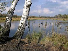 Blick auf den Hochmoorsee im Wittmoor von Hamburg Duvenstedt - eine Birke steht am Ufer; abgestorbene Bäume, Baumstümpfe im Wasser.