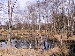 Hochmoor Wittmoor in Hamburg Duvenstedt - Hochmoorsee, vertrocknetes Gras - Wiese mit Birken.