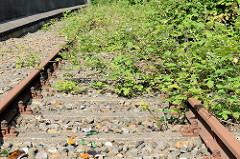 Stillgelegte Bahngleise der Harburger Hafenbahn - rostige Eisenbahngleise mit Brombeergestrüpp  überwuchert.