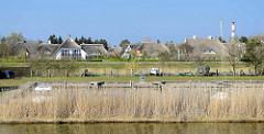 Ferienhaussiedlung - mit Reet gedeckte Ferienhäuser hinter dem Deich am Zingster Strom / Barther Bodden in Zingst, Mecklenburg Vorpommern - im Vordergrund eine Marina, re. der Leuchtturm.