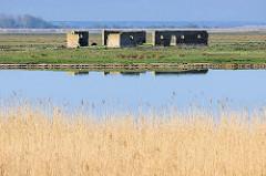 Verlassenes Gehöft auf der Insel Kirr im Barther Bodden bei Zingst. Die Vogelschutzinsel Kirr ist eine Salzgrasinsel mit einer Länge von ca. 3,5 km und einer maximalen Breite von 1,5 km mit weitverzweigten Prielen. Durch den Naturschutz ist Kirr h