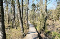 Holzweg durch den Nationalpark Vorpommersche Boddenlandschaft / Darßer Ort beim Ostseebad Prerow.