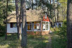 Ferienhaus mit Reetdach zwischen Kiefern - Veranda mit großen Glasfenstern, Ostseebad Prerow.